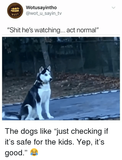 """Dogs, Shit, and Good: Wotusayintho  @wot_u_sayin_tv  eust  """"Shit he's watching... act normal"""" The dogs like """"just checking if it's safe for the kids. Yep, it's good."""" 😂"""