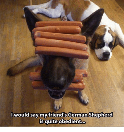 my friend in german Free, ready-made german essays to use straight away in this article, learn how to write about your best friend in german.