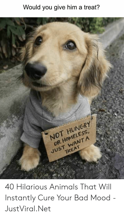 not hungry: Would you give him a treat?  NOT HUNGRY  OR HOMELESS  JUST WANTA  TREAT 40 Hilarious Animals That Will Instantly Cure Your Bad Mood - JustViral.Net