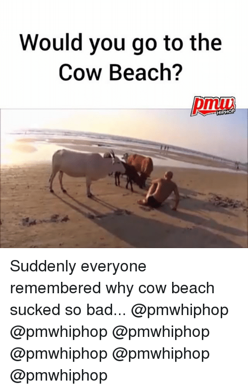 Bad, Memes, and Beach: Would you go to the  Cow Beach?  HIPHOP Suddenly everyone remembered why cow beach sucked so bad... @pmwhiphop @pmwhiphop @pmwhiphop @pmwhiphop @pmwhiphop @pmwhiphop