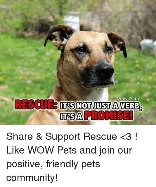 Memes, 🤖, and Sai: Wow Pets  RESO.  ITS NOT JUST A VERB  SAI PROMISE! Share & Support Rescue <3 ! Like WOW Pets and join our positive, friendly pets community!