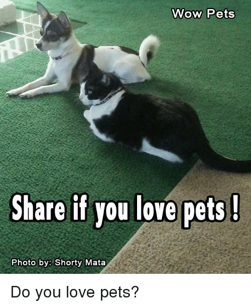 Memes, 🤖, and Mata: Wow Pets  Share if you love pets!  Photo by: Shorty Mata Do you love pets?
