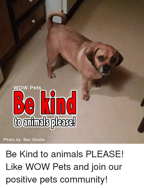 Memes, Being Kind, and 🤖: WOW Pets  to please!  Photo by: Bev Shults Be Kind to animals PLEASE! Like WOW Pets and join our positive pets community!