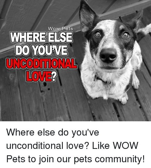 Memes, 🤖, and Unconditional Love: Wow Pets  WHERE ELSE  DO YOUWE Where else do you've unconditional love? Like WOW Pets to join our pets community!