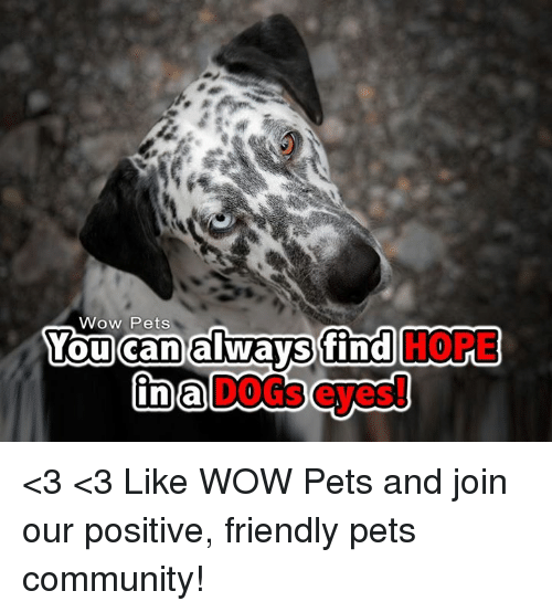Memes, 🤖, and Wow Pet: Wow Pets  You can always find <3 <3  Like WOW Pets and join our positive, friendly pets community!