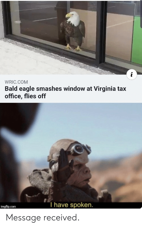 tax: WRIC.COM  Bald eagle smashes window at Virginia tax  office, flies off  T have spoken.  imgflip.com Message received.