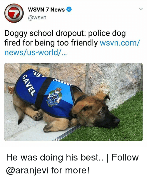 dogged: WSVN 7 News e  @wsvn  Doggy school dropout: police dog  fired for being too friendly wsvn.com/  news/us-world/  90 He was doing his best.. | Follow @aranjevi for more!