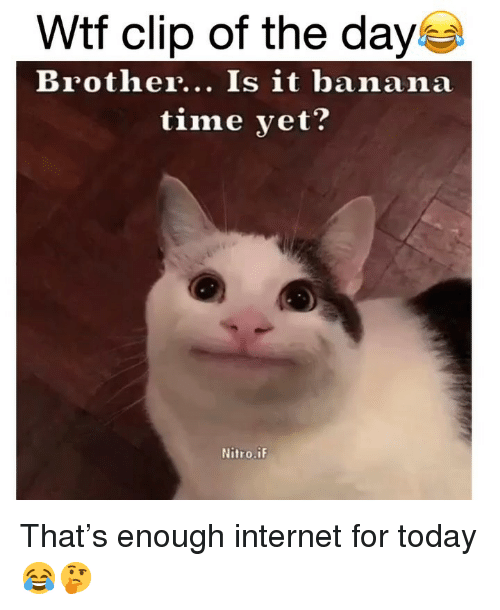 Enough Internet For Today: Wtf clip of the day  Brother... Is it banana  time yet?  Nitro.iF That's enough internet for today 😂🤔
