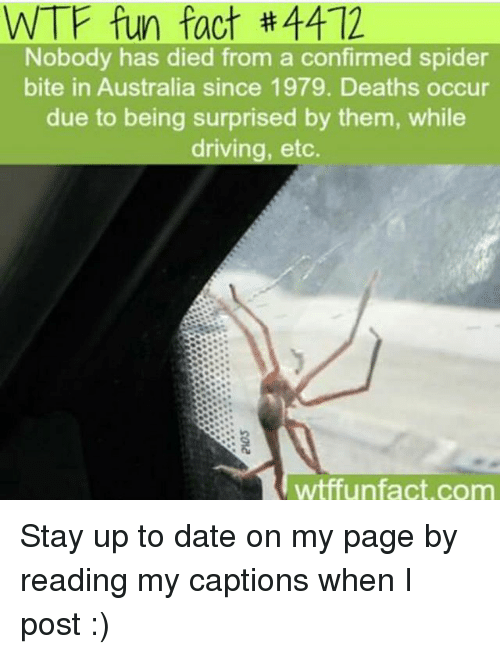 wtf fun facts: WTF fun fact #4412  Nobody has died from a confirmed spider  bite in Australia since 1979. Deaths occur  due to being surprised by them, while  driving, etc.  wtffun fact, com Stay up to date on my page by reading my captions when I post :)
