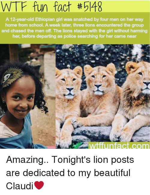 Ethiopians: WTF fun fact 548  A 12-year-old Ethiopian girl was snatched by four men on her way  home from school. A week later, three lions encountered the group  and chased the men off. The lions stayed with the girl without harming  her, before departing as police searching for her came near  wtfun fact com Amazing.. Tonight's lion posts are dedicated to my beautiful Claudi❤️