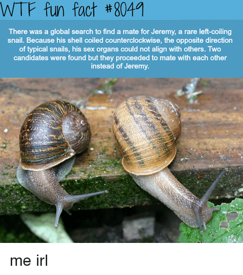 wtf fun fact: WTF fun fact #8049  There was a global search to find a mate for Jeremy, a rare left-coiling  snail. Because his shell coiled counterclockwise, the opposite direction  of typical snails, his sex organs could not align with others. Two  candidates were found but they proceeded to mate with each other  instead of Jeremy. me irl
