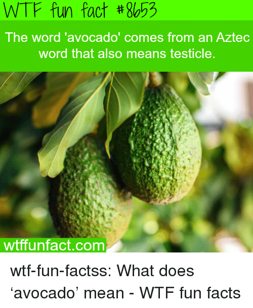 wtf fun facts: WTF fun fact #8653  The word 'avocado  ' comes from an Aztec  word that also means testicle  wtffunfact.com wtf-fun-factss:  What does 'avocado' mean - WTF fun facts