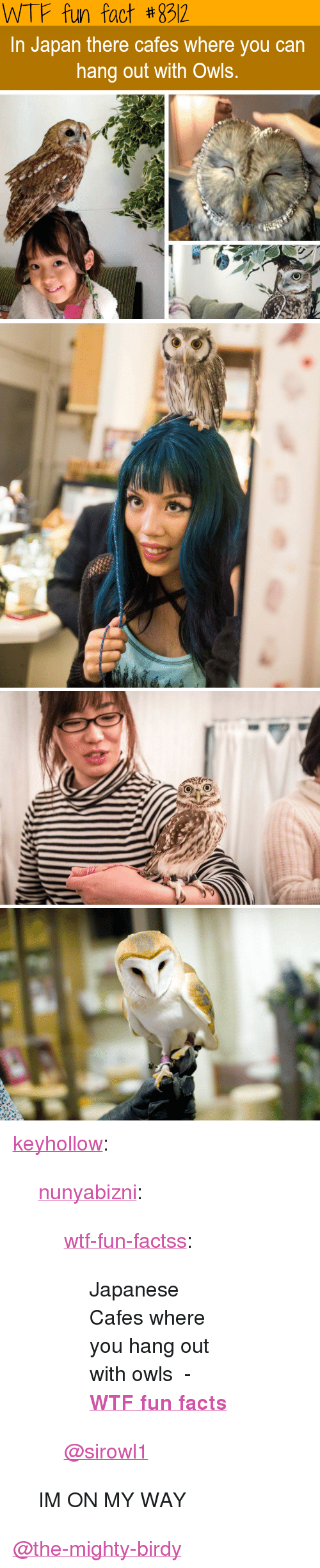 "wtf fun facts: WTF fun fact #892  In Japan there cafes where you can  hang out with Owls. <p><a href=""http://keyhollow.tumblr.com/post/169370681815/nunyabizni-wtf-fun-factss-japanese-cafes"" class=""tumblr_blog"">keyhollow</a>:</p>  <blockquote><p><a href=""https://nunyabizni.tumblr.com/post/169367481212/wtf-fun-factss-japanese-cafes-where-you-hang-out"" class=""tumblr_blog"">nunyabizni</a>:</p> <blockquote> <p><a href=""http://wtffunfact.com/post/169367298097/japanese-cafes-where-you-hang-out-with-owls-wtf"" class=""tumblr_blog"">wtf-fun-factss</a>:</p> <blockquote><p>Japanese Cafes where you hang out with owls  - <b><a href=""http://t.umblr.com/redirect?z=http%3A%2F%2Fwtffunfact.com&amp;t=ZDhmY2M3OTcyYjNiNjUxYmJhM2M3M2U5MzdlZmY3ZDI5MjRjZDEzZix6SkRWellMdw%3D%3D&amp;b=t%3Az9OKwGAR5vFReO8UIkz88w&amp;p=http%3A%2F%2Fwtffunfact.com%2Fpost%2F169240304262%2Fonly-half-of-your-brain-sleeps-when-you-sleep-in&amp;m=1"">WTF fun facts</a></b><br/></p></blockquote> <p style=""""><a class=""tumblelog"" href=""https://tmblr.co/mI7eUZvpvxiX5go8iH4JPtw"">@sirowl1</a><br/></p> </blockquote>  <p>IM ON MY WAY</p></blockquote>  <a class=""tumblelog"" href=""https://tmblr.co/mqJeMrC1zUWwi8Nf-Fyv_4g"">@the-mighty-birdy</a>"