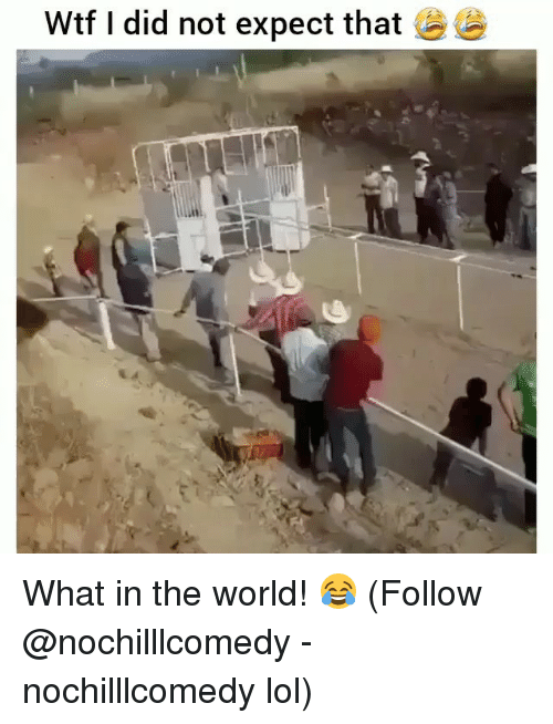 Lol, Memes, and Wtf: Wtf I did not expect that What in the world! 😂 (Follow @nochilllcomedy - nochilllcomedy lol)