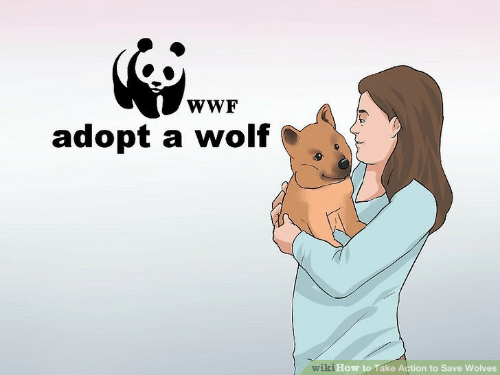 wwf: wWF  adopt a wolf  wiki How to Take Action to Save Wolves