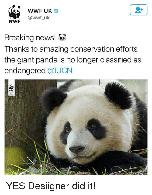 News, Desiigner, and Panda: WWF UK  @wwf uk  WWF  Breaking news!  Thanks to amazing conservation efforts  the giant panda is no longer classified as  endangered  @IUCN YES  Desiigner did it!
