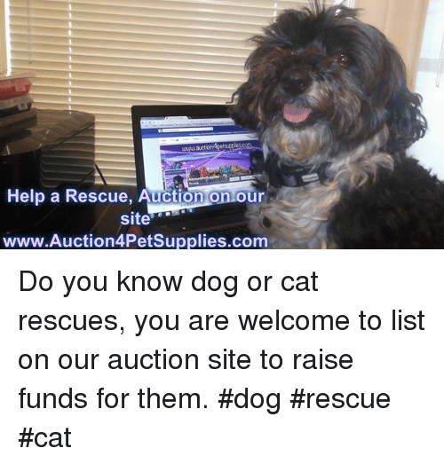 Memes, Help, and 🤖: www.au  Help a Rescue, Auction on our  site  www.Auction4PetSupplies.com Do you know dog or cat rescues, you are welcome to list on our auction site to raise funds for them. #dog #rescue #cat