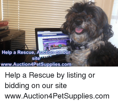 Memes, Help, and 🤖: www.au  Help a Rescue, Auction on our  site  www.Auction4PetSupplies.com Help a Rescue by listing or bidding on our site  www.Auction4PetSupplies.com