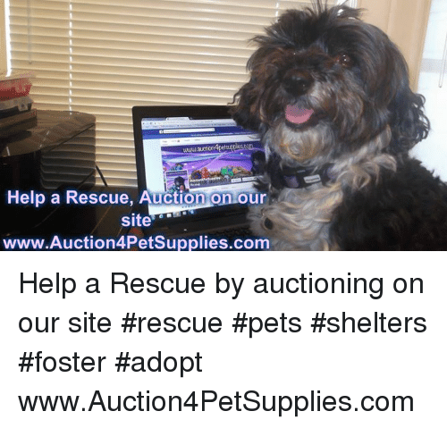 Memes, Pets, and Help: www.au  Help a Rescue, Auction on our  site  www.Auction4PetSupplies.com Help a Rescue by auctioning on our site   #rescue #pets #shelters #foster #adopt  www.Auction4PetSupplies.com