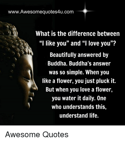 """Memes, Buddha, and 🤖: www.Awesomequotes4u.com  What is the difference between  """"I like you"""" and """"I love you""""?  Beautifully answered by  Buddha. Buddha's answer  was so simple. When you  like a flower, you just pluck it.  But when you love a flower,  you water it daily. One  who understands this,  understand life. Awesome Quotes"""