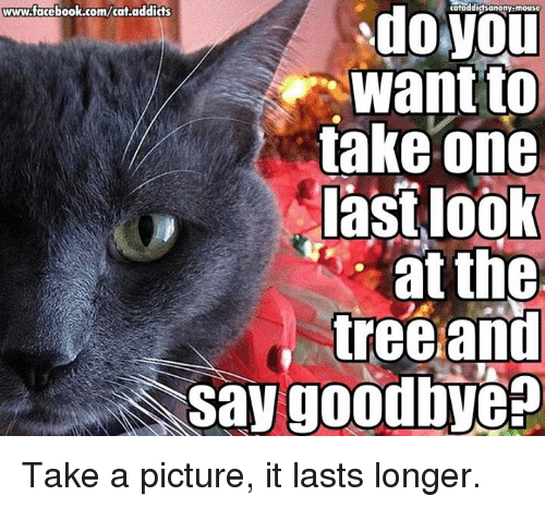 Cats, Memes, and Addicted: www.facebook.com/cat.addicts  do cataddidsanony-mouse  want to  take one  last look  at the  tree and  say goodbye Take a picture, it lasts longer.