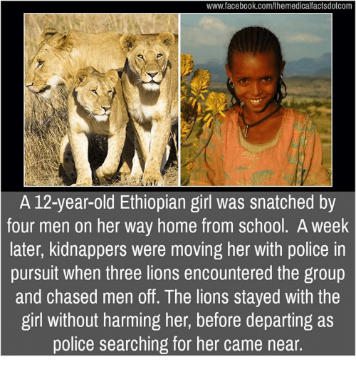 Ethiopians: www.facebook.com/themedicalfactsdotcom  A 12-year-old Ethiopian girl was snatched by  four men on her way home from school. A week  later, kidnappers were moving her with police in  pursuit when three lions encountered the group  and chased men off. The lions stayed with the  girl without harming her, before departing as  police searching for her came near
