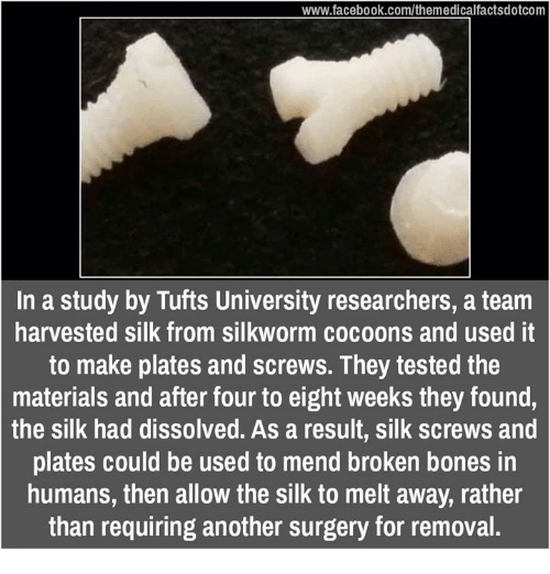 Broken Bones: www.facebook.com/themedicalfactsdotcom  In a study by Tufts University researchers, a team  harvested silk from silkworm cocoons and used it  to make plates and screws. They tested the  materials and after four to eight weeks they found,  the silk had dissolved. As a result, silk screws and  plates could be used to mend broken bones in  humans, then allow the silk to melt away, rather  than requiring another surgery for removal.