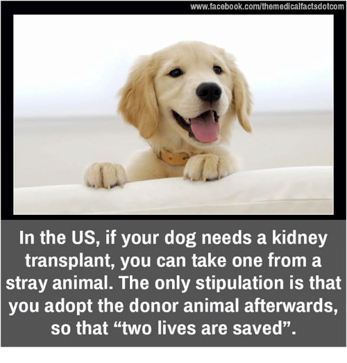 "Memes, Stipulations, and 🤖: www.facebook.com/themedicalfactsdotcom  In the US, if your dog needs a kidney  transplant, you can take one from a  stray animal. The only stipulation is that  you adopt the donor animal afterwards,  so that ""two lives are saved""."