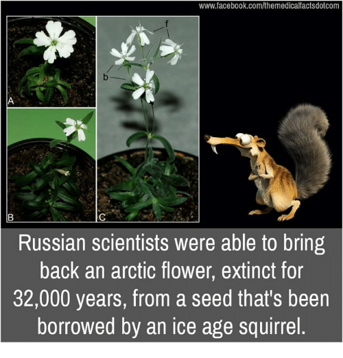 Memes, Ice Age, and 🤖: www.facebook.com/themedicalfactsdotcom  Russian scientists were able to bring  back an arctic flower, extinct for  32,000 years, from a seed that's been  borrowed by an ice age squirrel