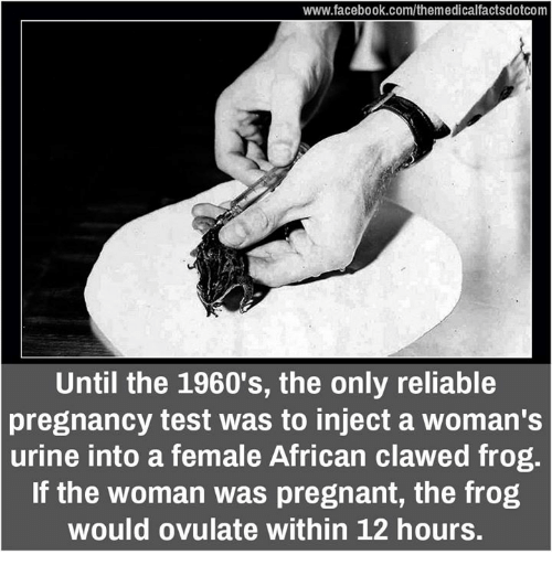 Urin: www.facebook.com/themedicalfactsdotcom  Until the 1960's, the only reliable  pregnancy test was to inject a woman's  urine into a female African clawed frog.  If the woman was pregnant, the frog  would ovulate within 12 hours.