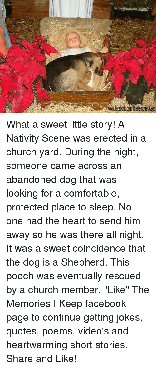 """Joke Quotes: www.facebook.com TheMemorieskeep What a sweet little story! A Nativity Scene was erected in a church yard. During the night, someone came across an abandoned dog that was looking for a comfortable, protected place to sleep. No one had the heart to send him away so he was there all night. It was a sweet coincidence that the dog is a Shepherd. This pooch was eventually rescued by a church member.   """"Like"""" The Memories I Keep facebook page to continue getting jokes, quotes, poems, video's and heartwarming short stories. Share and Like!"""