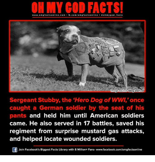 Facebook, Facts, and God: www.om facts online.com I fb.com  /omg facts on  a oh my god facts  blog.ww.ca  mage Source  Sergeant Stubby, the Hero Dog of WW,'once  caught a German soldier by the seat of his  pants and held him until American soldiers  came. He also served in 17 battles, saved his  regiment from surprise mustard gas attacks,  and helped locate wounded soldiers  Join Facebook's Biggest Facts Library with 6 Million+ Fans- www.facebook.com/omgfactsonline