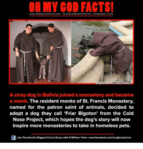 st francis: www.omg facts online.com I fb.com  m g facts online I a oh my god facts  vako tumblr.com  mage Source  A stray dog in Bolivia joined a monastery and became  a monk. The resident monks of St. Francis Monastery,  named for the patron saint of animals, decided to  adopt a dog they call Friar Bigoton' from the Cold  Nose Project, which hopes the dog's story will now  inspire more monasteries to take in homeless pets.  Join Facebook's Biggest Facts Library with 6 Million+ Fans- www.facebook.com/omgfactsonline