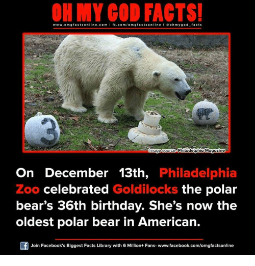 ohm: www.omg facts online.com I fb.com  omg facts online I ohm y god facts  Philadelphia Magazine  mage Source  On December 13th,  Philadelphia  Zoo celebrated  Goldilocks the polar  bear's 36th birthday. She's now the  oldest polar bear in American.  Join Facebook's Biggest Facts Library with 6 Million+ Fans- www.facebook.com/omgfactsonline