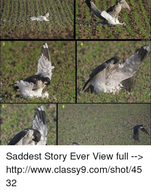 Www saddest story ever view full for Http pictures