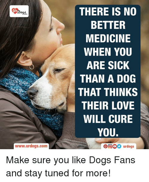 how to make your dog feel better when sick