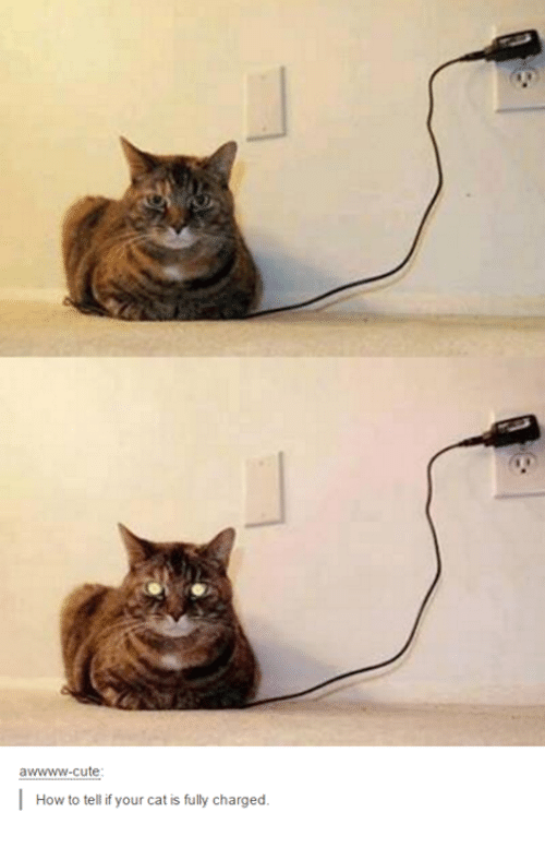 Fully Charged Cat Meme