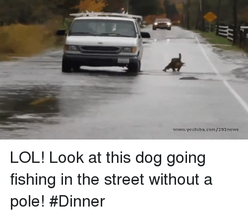 Look At This Dog: wwww.youtube.com/282nows LOL! Look at this dog going fishing in the street without a pole! #Dinner