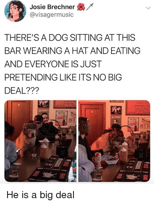 no big deal: /x  Josie Brechner  @visagermusic  THERE'S A DOG SITTING AT THIS  BAR WEARING A HAT AND EATING  AND EVERYONE IS JUST  PRETENDING LIKE ITS NO BIG  DEAL???  Fries or Tots  ALCOHOL  Hot  Hot  HOT He is a big deal