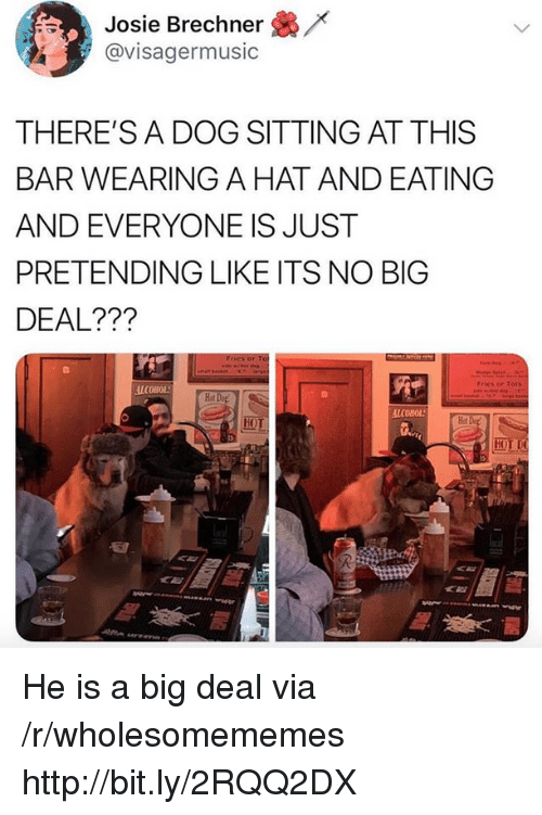 no big deal: /x  Josie Brechner  @visagermusic  THERE'S A DOG SITTING AT THIS  BAR WEARING A HAT AND EATING  AND EVERYONE IS JUST  PRETENDING LIKE ITS NO BIG  DEAL???  Fries or Tots  ALCOHOL  Hot  Hot  HOT He is a big deal via /r/wholesomememes http://bit.ly/2RQQ2DX