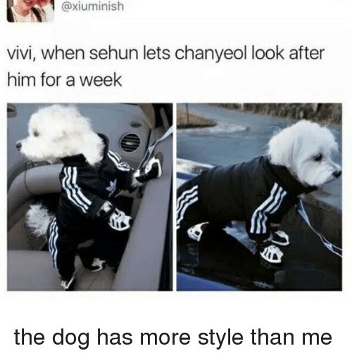 Sehun: @xiuminish  vivi, when sehun lets chanyeol look after  him for a week the dog has more style than me