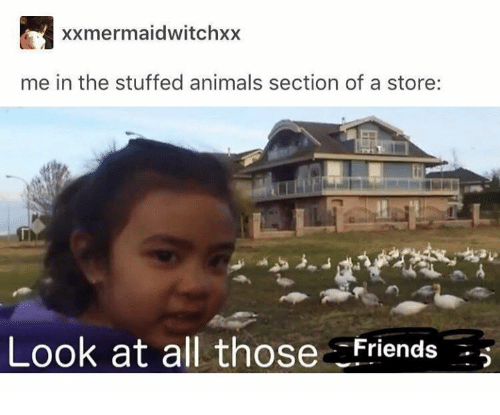Animals, All, and Store: xxmermaidwitchxx  me in the stuffed animals section of a store:  Look at all those Friends5