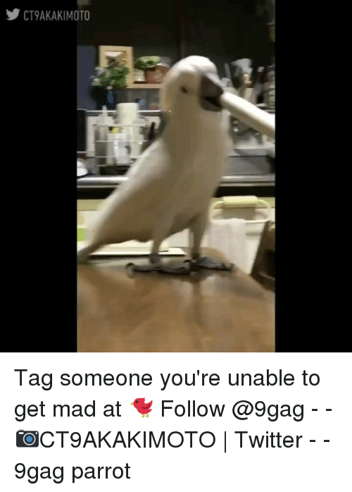 9gag, Memes, and Twitter: y CT9AKAKIMOTO Tag someone you're unable to get mad at 🐦 Follow @9gag - - 📷CT9AKAKIMOTO | Twitter - - 9gag parrot