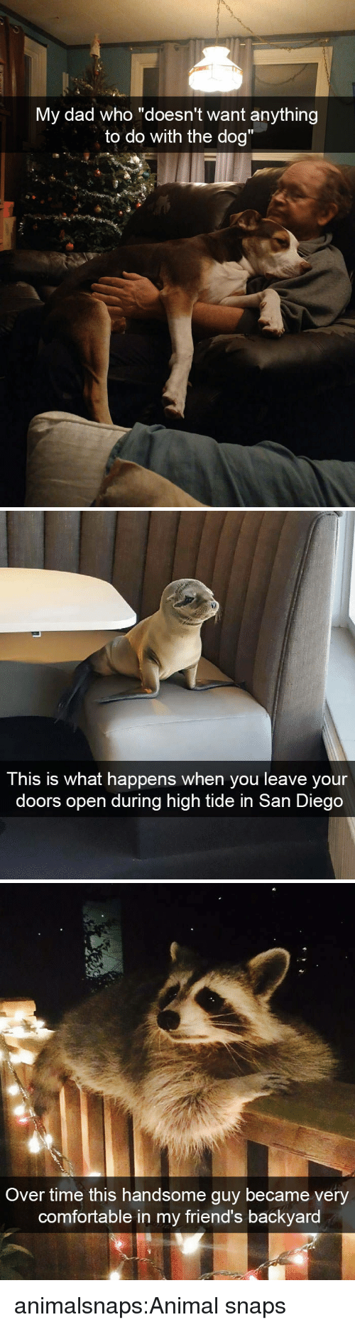 """Tide: y dad who """"doesn't want anythin  to do with the dog""""  M  g   This is what happens when you leave your  doors open during high tide in San Diego   Over time this handsome guy became very  comfortable in my friend's backyard animalsnaps:Animal snaps"""