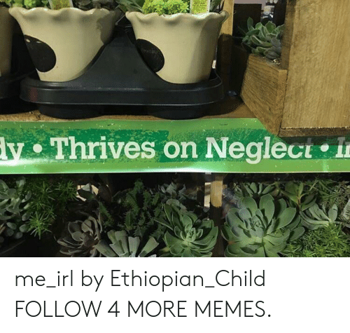 Ethiopian: y Thrives on Neglect in me_irl by Ethiopian_Child FOLLOW 4 MORE MEMES.