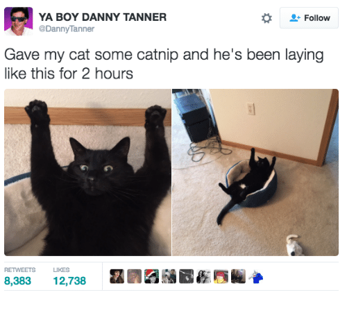 Lay's, Memes, and 🤖: YA BOY DANNY TANNER  Follow  @Danny Tanner  Gave my cat some catnip and he's been laying  like this for 2 hours  RETWEETS LIKES  8,383  12,738