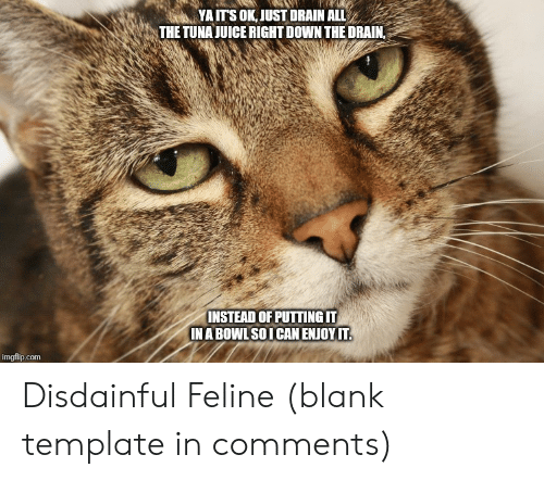 tuna: YA ITS OK, JUST DRAIN ALL  THE TUNA JUICE RIGHT DOWN THE DRAIN,  INSTEAD OF PUTTING IT  IN A BOWL SOI CAN ENJOY IT.  imgflip.com Disdainful Feline (blank template in comments)