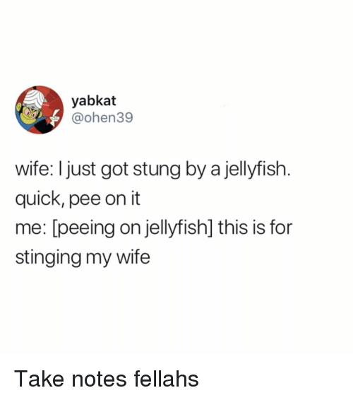 stinging: yabkat  @ohen39  wife: I just got stung by a jellyfish  quick, pee on it  me: [peeing on jellyfish] this is for  stinging my wife Take notes fellahs