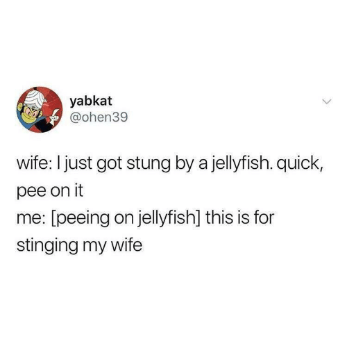 stinging: yabkat  @ohen39  wife: I just got stung by a jellyfish. quick,  pee on it  me: [peeing on jellyfish] this is for  stinging my wife