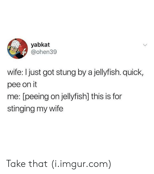 stinging: yabkat  @ohen39  wife: I just got stung by a jellyfish. quick,  pee on it  me: [peeing on jellyfish] this is for  stinging my wife Take that (i.imgur.com)